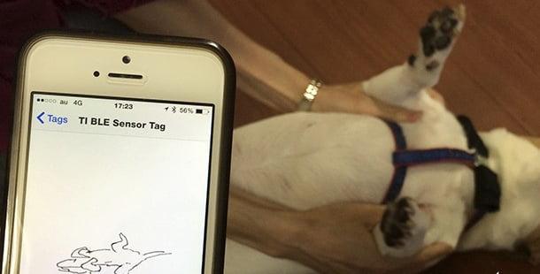 Köpekler İçin Giyilebilir Teknoloji: Shiraseru Am