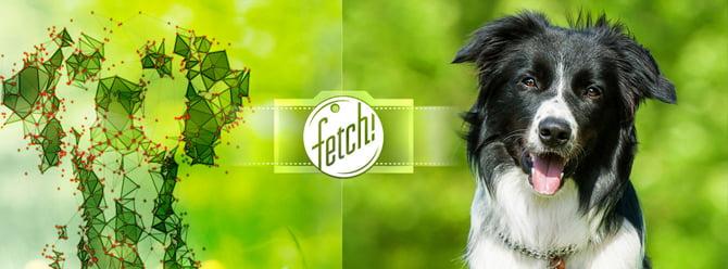Köpek cinslerini bulan uygulama Microsoft Fetch!