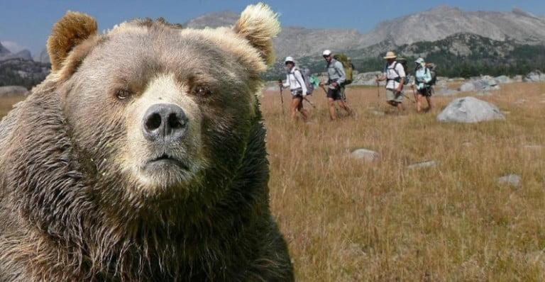 İki farklı tablo: Selfie çekerken boğuluyordu ve ayıların havuz keyfi