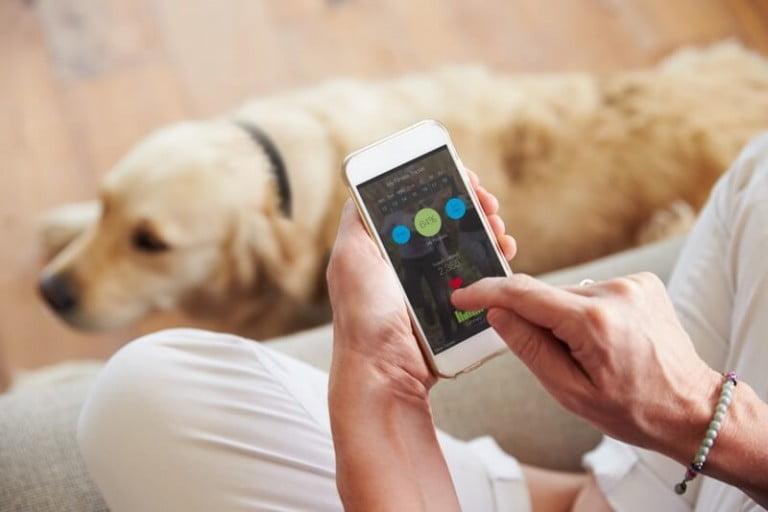 Evcil hayvanlarınız için yaratıcı ve çılgın teknoloji ürünleri
