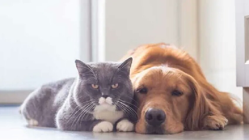 Köpeklerle ilgili araştırma