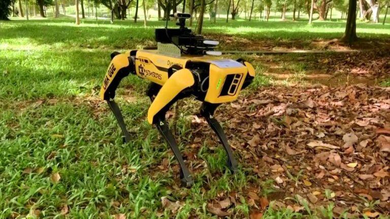 Koyun güden robot dünyanın ilgisini çekti