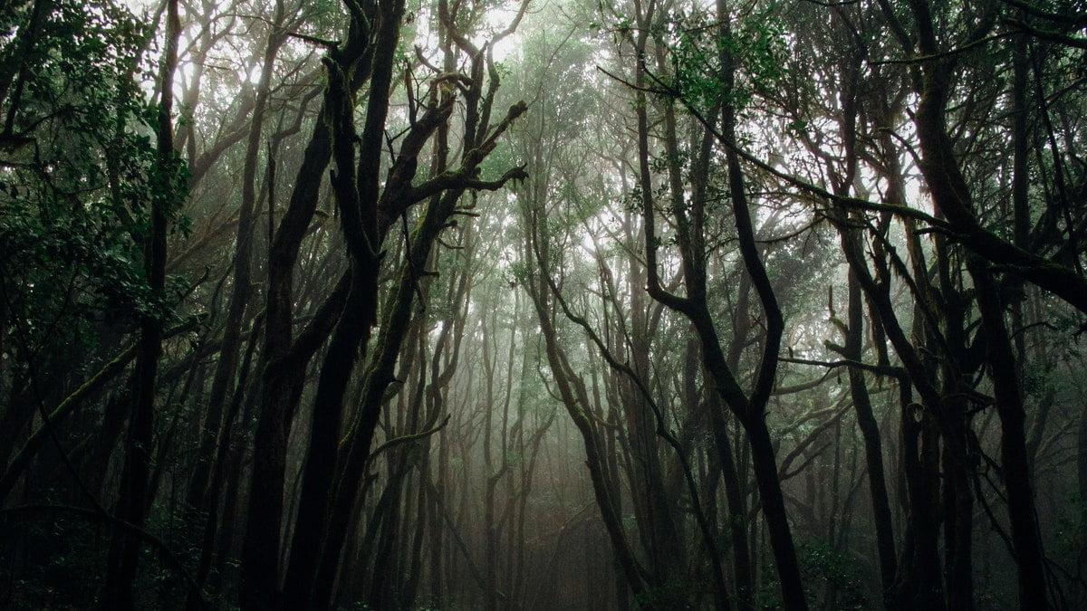 ormanlarda insan kalıntıları