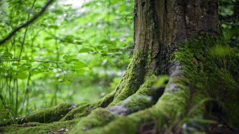 Ormanlarda insan kalıntıları bulmak mümkün olacak!