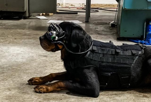 Askeri köpek için AR gözlüğü ürettiler