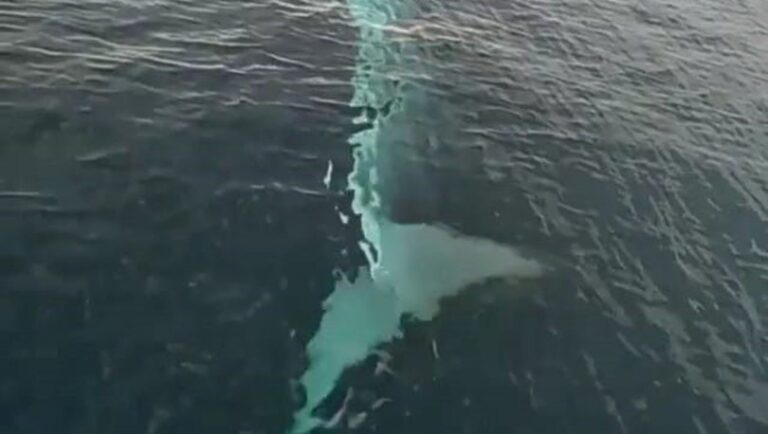 Türkiye'de görülen balina sosyal medyayı salladı