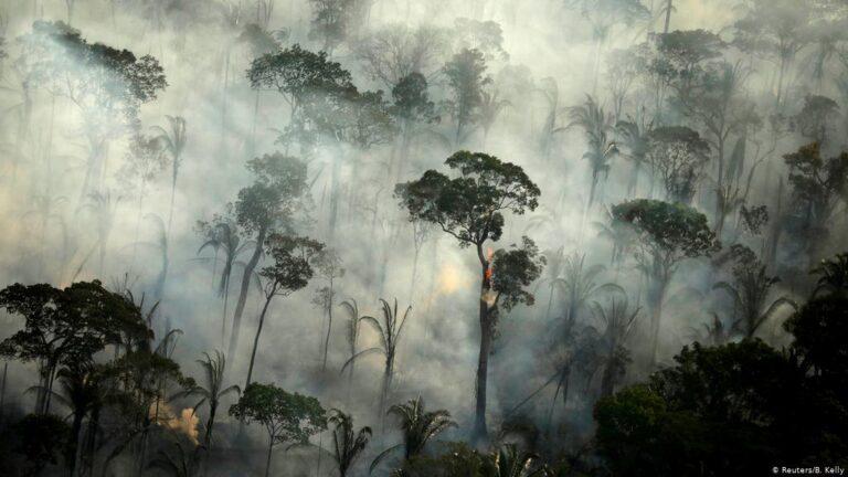 Brezilya ormanları kritik erişe geldi! Küresel ısınma artacak