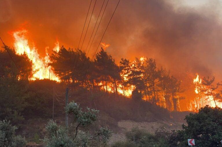 Google Haritalar, dünya çapında orman yangını takibi başlatacak