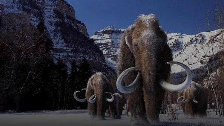 Mamutlar geri geliyor! Biyoteknoloji firmasından şaşırtıcı hamle