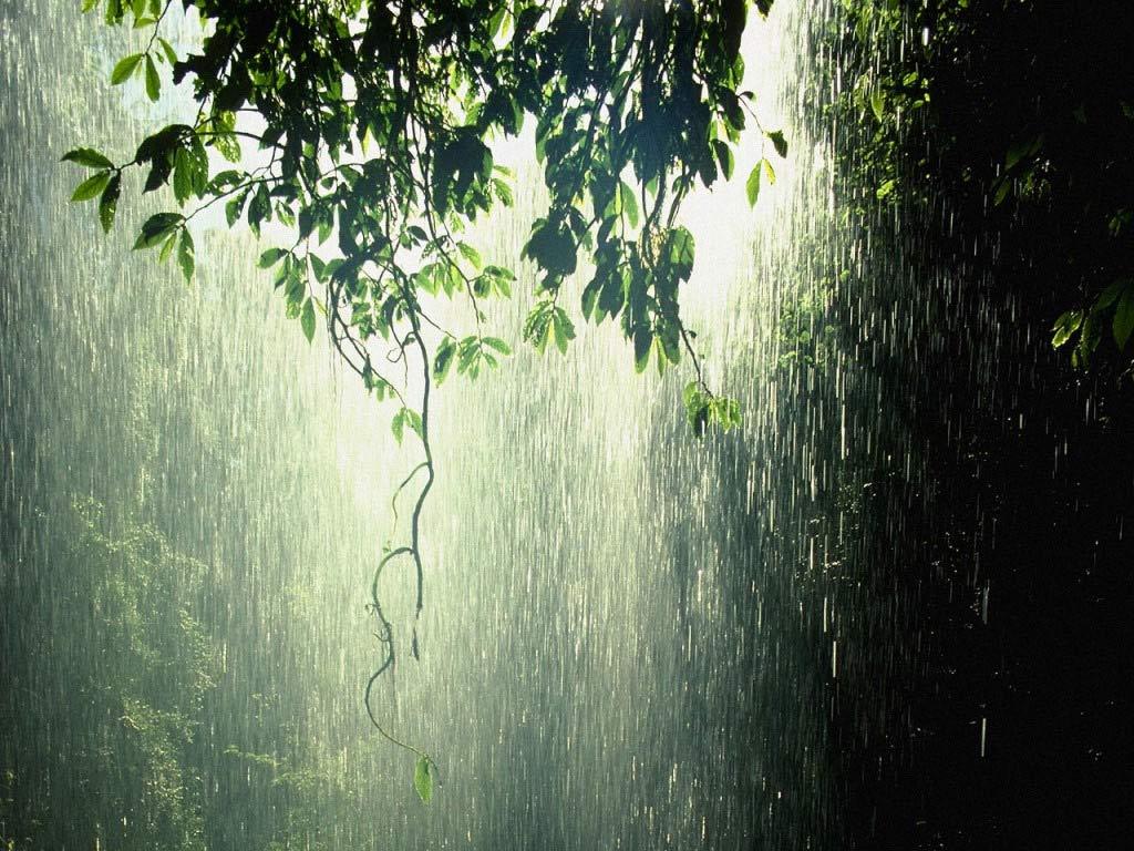Yağmur Zamanı Gelip Çattı!